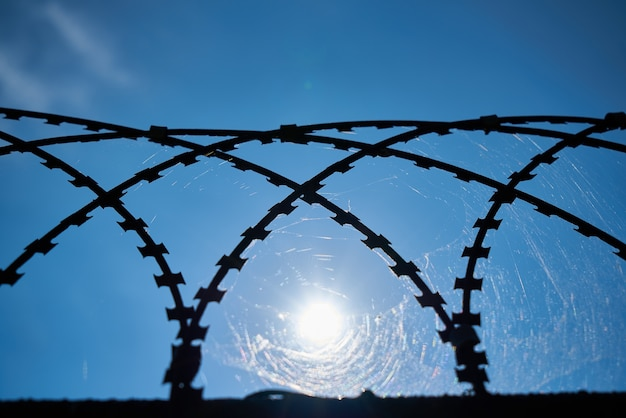 Web in a metal grille Free Photo