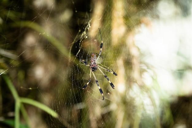 背景をぼかした写真をweb上のクモ 無料写真