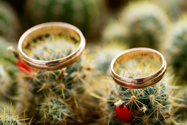Wedding gold rings on cactus with orange fruits. love, marriage concept. side view. Premium Photo