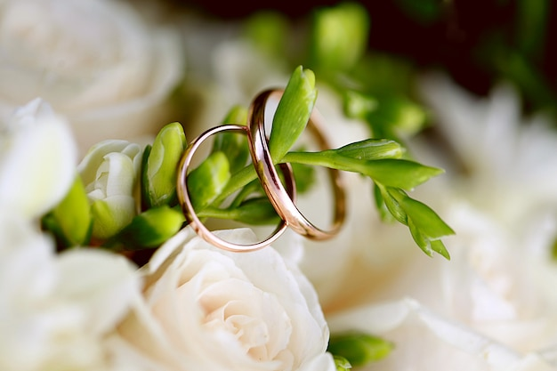 Wedding rings close-up on branch. wedding decor Premium Photo