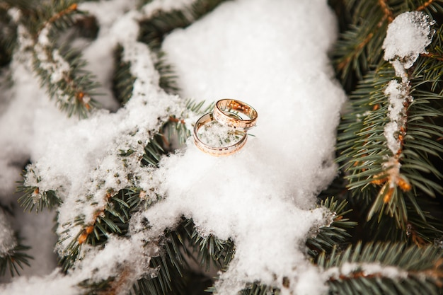 Wedding rings close up on snow Free Photo