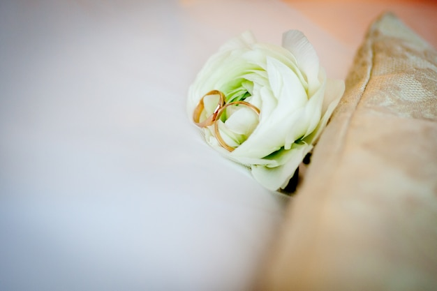 Wedding rings, gold with on a white rose Premium Photo