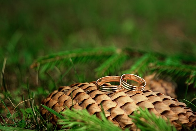 Wedding rings on a pine cone.  marriage, family relationships, wedding paraphernalia. Premium Photo