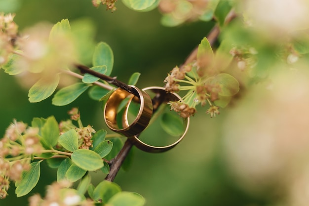 Wedding rings, wedding celebrations and accessories and decorations Free Photo