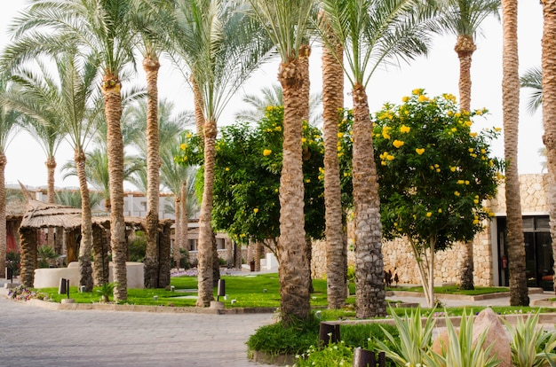 Well-groomed park area with palm trees and cacti. Premium Photo