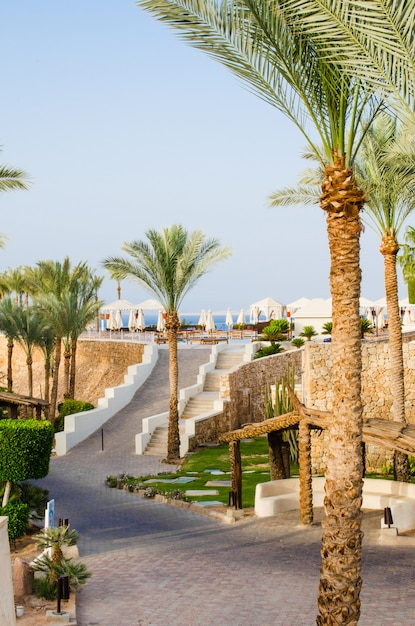 Well-groomed park territory of five star hotel in sharm el sheikh. Premium Photo