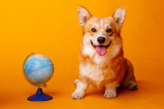 ウェルシュコーギーペンブローク犬 Premium写真