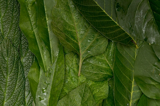 Wet close-up green leaves background Free Photo