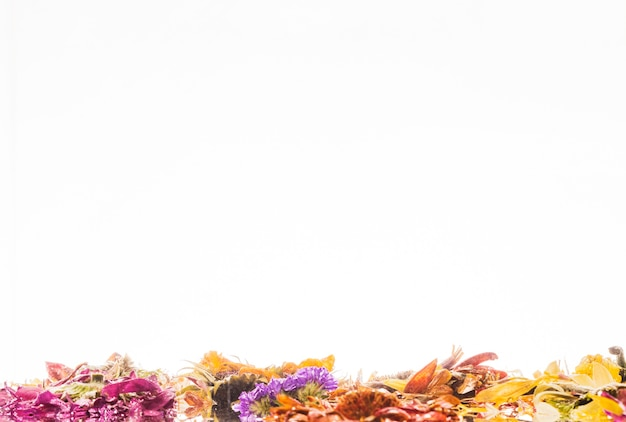 Wet colorful daisies over white background Free Photo