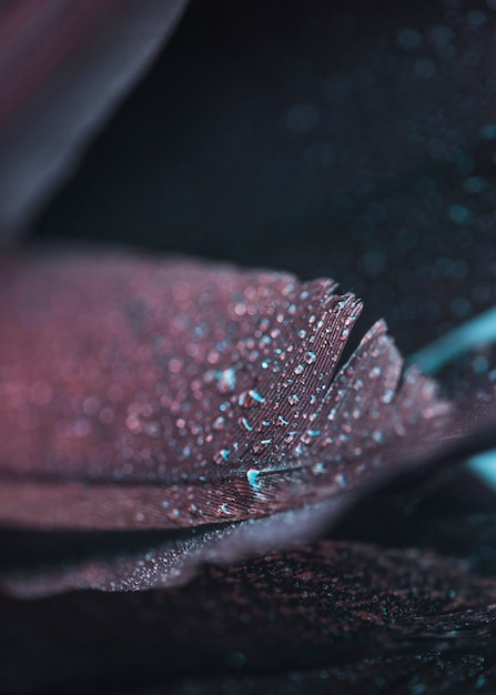 Wet fresh beautiful colorful feather on textured background Free Photo