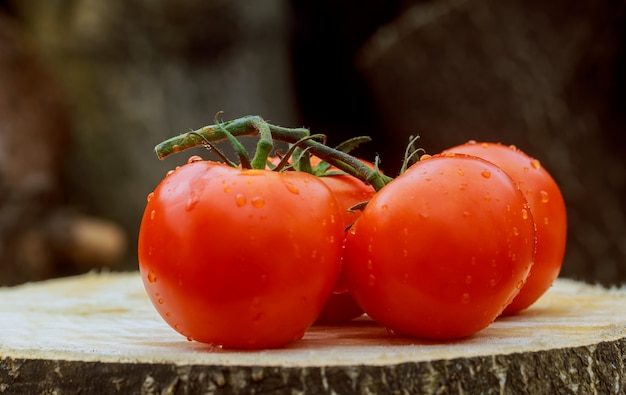Wet tomatoes on the vine. drops with a beautiful reflection. focus on the drops. Premium Photo
