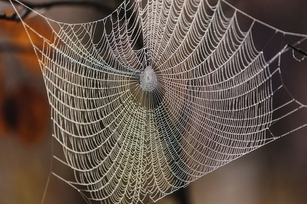 Мокрая паутина в лесу. хэллоуин и осенний фон. Premium Фотографии