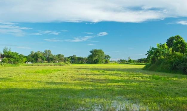 Grass Landscape Wetland with green grass field landscape photo premium download wetland with green grass field landscape premium photo workwithnaturefo