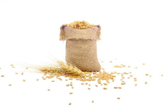 Wheat grain in bag Premium Photo