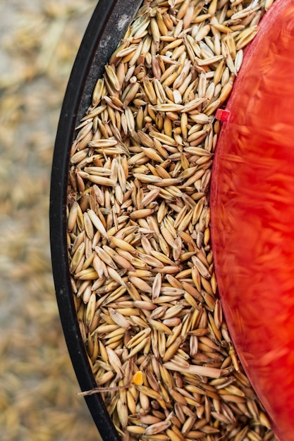 Wheat seeds in a feeding plat for animals Free Photo