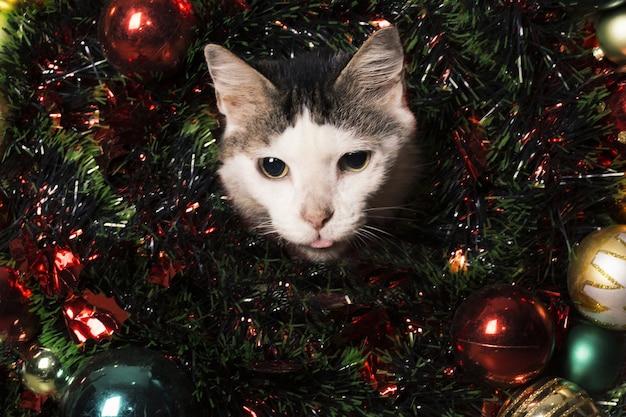 白と黒の猫 Premium写真