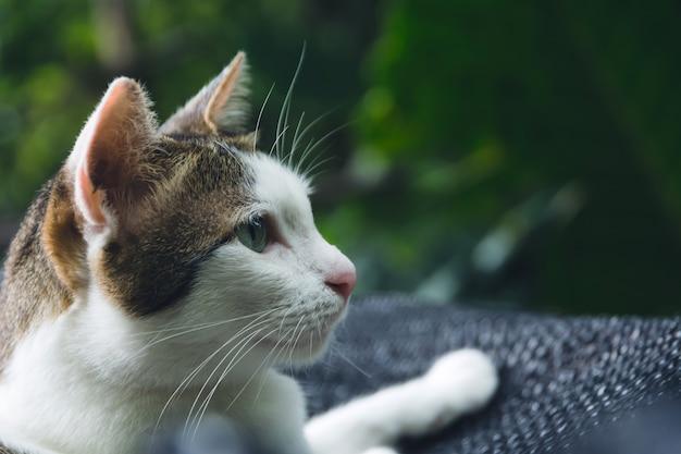 白と短い髪の猫の横に見え、挿入スペースのコピースペースで見ている。 Premium写真