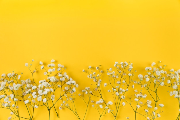 White baby breath's flower on yellow background Free Photo