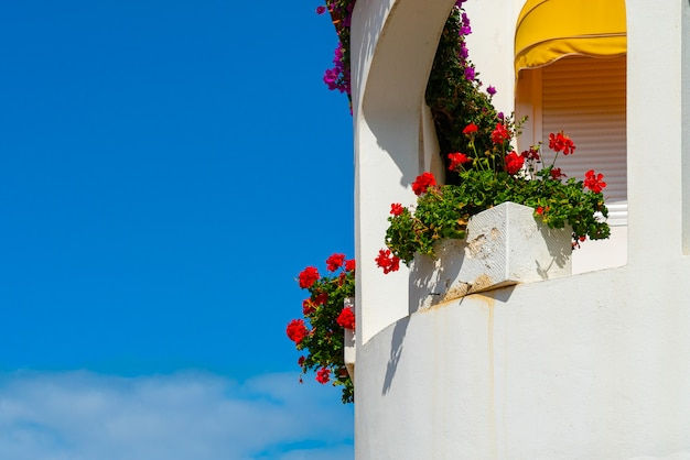 White balcony with red flowers against bright blue sky, puerto de la cruz, tenerife, spain Free Photo