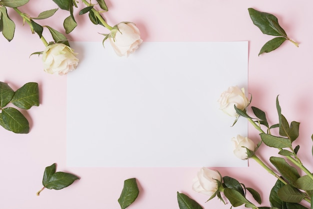 White beautiful roses on white blank paper against pink background Free Photo