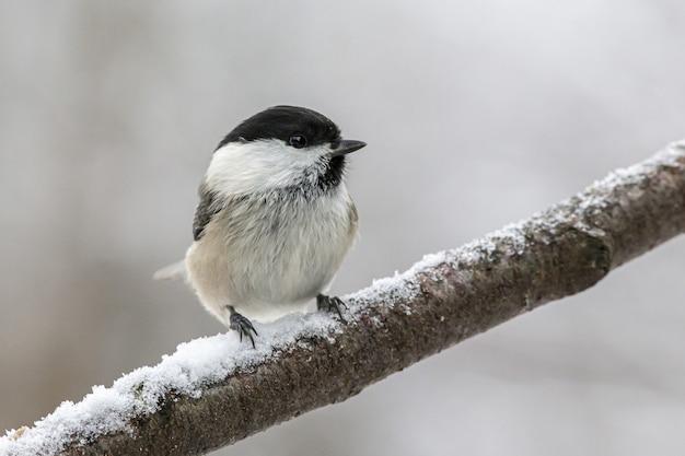 Uccello bianco e nero appollaiato sul ramo di un albero Foto Gratuite