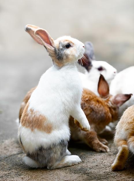 Белый коричневый кролик Premium Фотографии