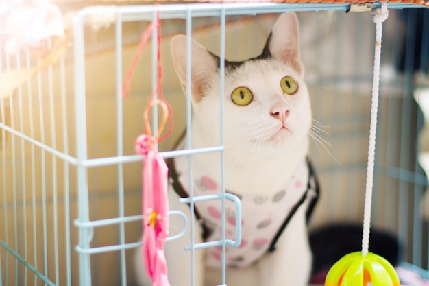 White cat enjoy and sitting in cage box with beautiful sunlight Premium Photo