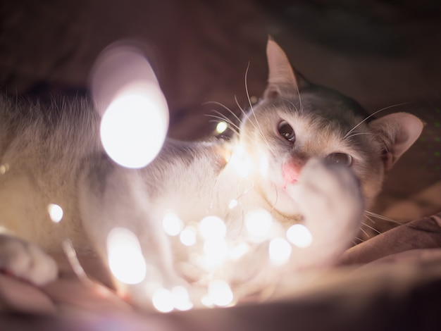White cat lying in the chain. glow lights. christmas backgrounds. Premium Photo