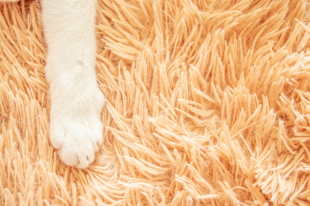White cat paw in bed soft feeling holiday idea background Premium Photo
