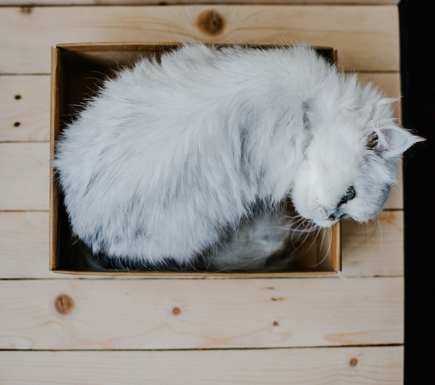 White cat rests in a box Premium Photo