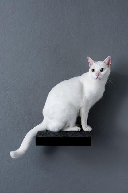 Белый кот сидит на полке Premium Фотографии