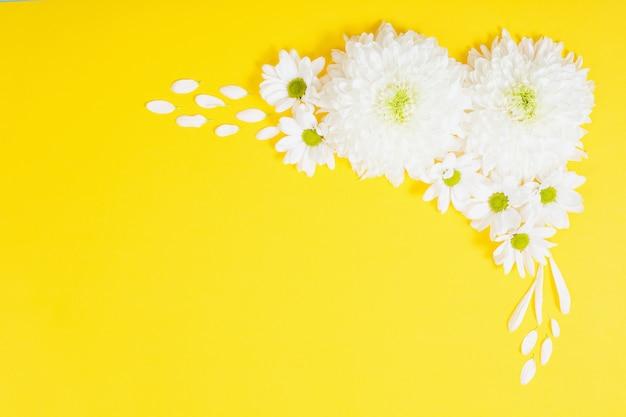 黄色の紙の背景に白い菊 Premium写真