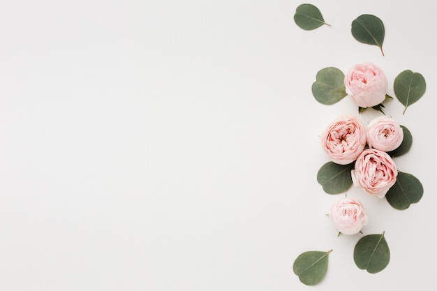 White copy space background with roses arrangement Free Photo