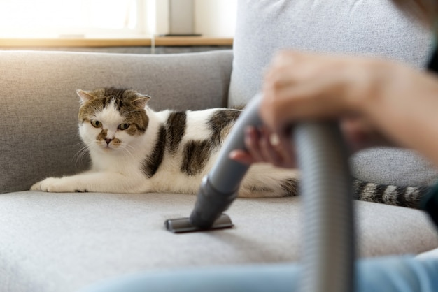 White cute cat sitting on sofa is looking at vacuum cleaner. Premium Photo