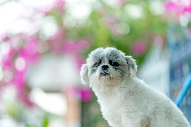 White dog picture, cute photo shoot, love dog concept Premium Photo