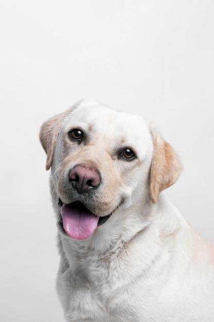 White dog Free Photo