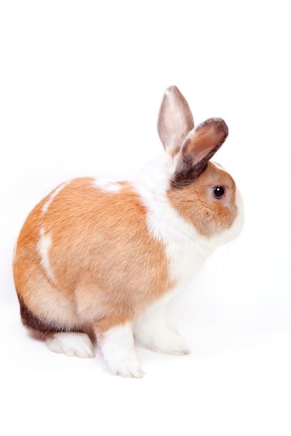 White easter bunny Premium Photo