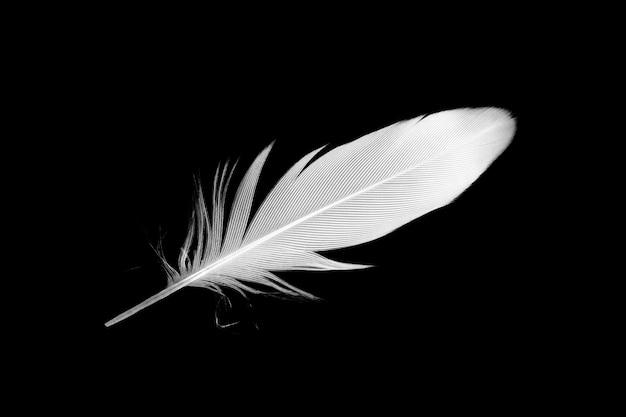 White feather on black background | Premium PhotoFeather Background Twitter