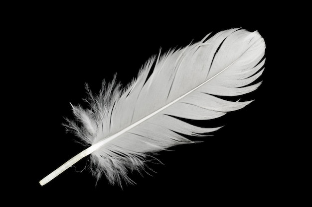 White feather isolated on black background | Premium PhotoFeather Background Twitter