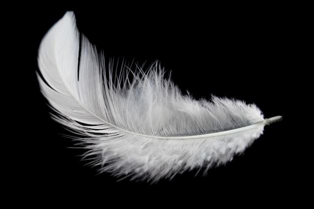 White feather isolated on black background. Premium Photo