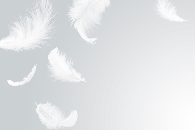 White feathers falling in the air. Premium Photo