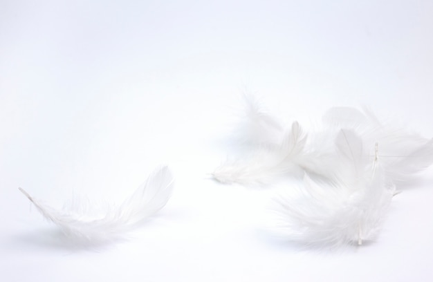 White feathers on white background. Premium Photo