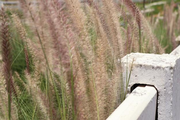 White fence on the farm Premium Photo