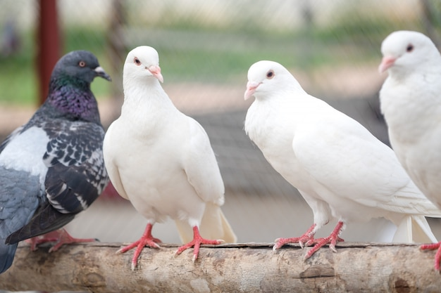 White flock on stem tree Premium Photo