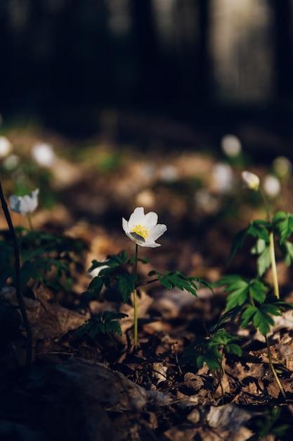 ジャングルの真ん中に白い花 無料写真