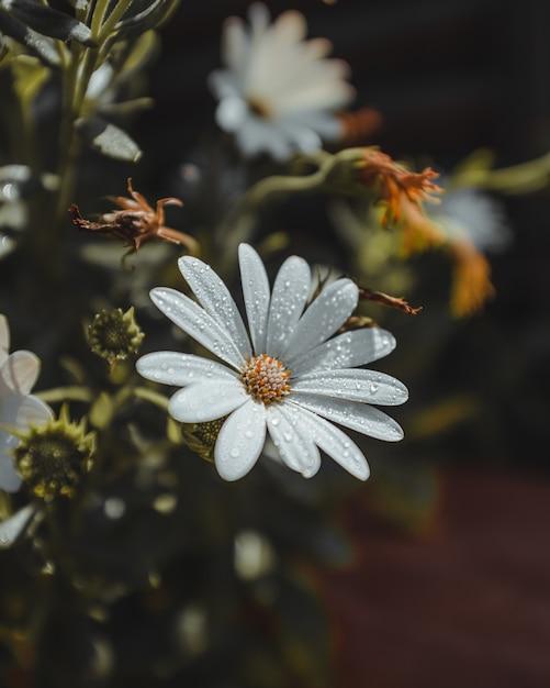 Petali di fiori bianchi con gocce d'acqua e polline Foto Gratuite