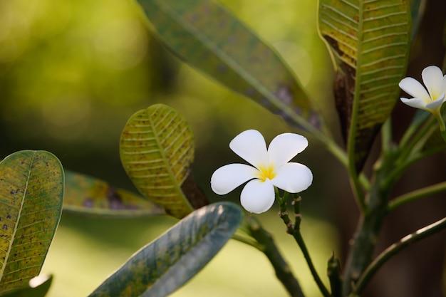 白い花 無料写真