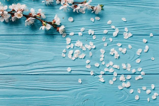 White flowers on blue background Premium Photo