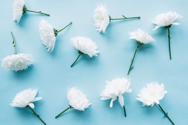 White Flowers Over A Light Blue Background Photo Free Download