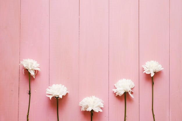 White flowers on pink photo free download white flowers on pink free photo mightylinksfo